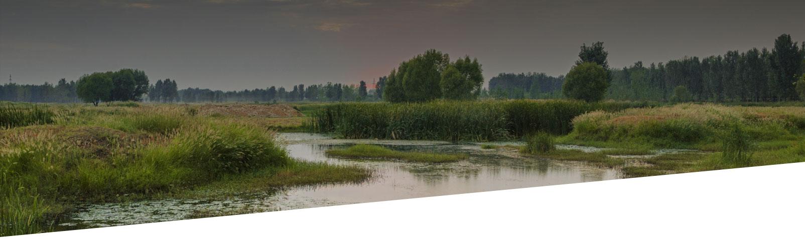 environmental wetland landscape